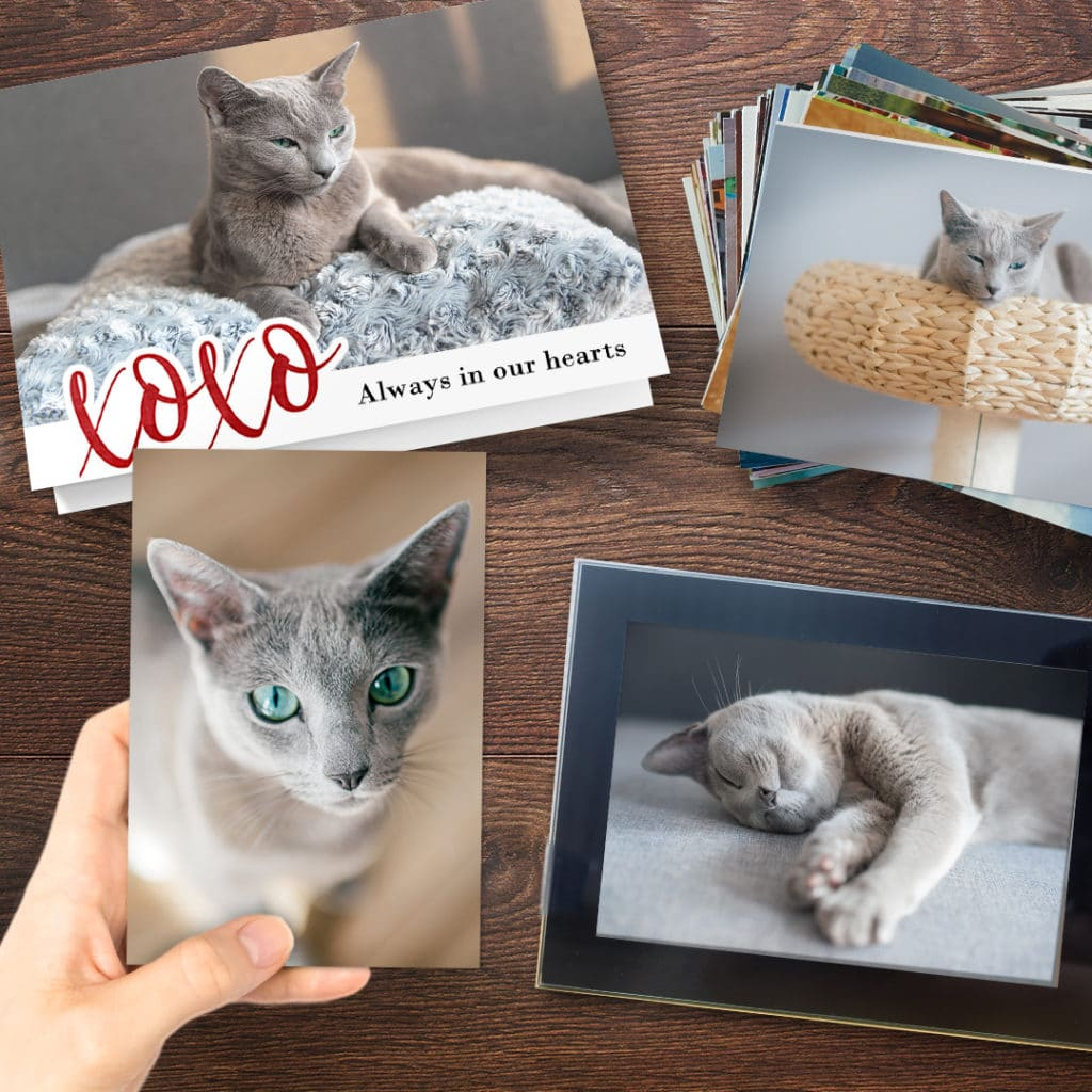 Cards and prints featuring pet cats
